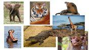 #1 Unit7 Wild Animals Lesson 1
