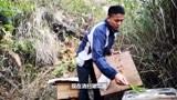 山上的野桂花多,村夫又从家里搬七箱蜜蜂放上山,早上去检查蜜蜂
