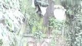 碧峰峡、峨嵋山之旅(2004年4月1日)