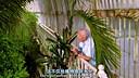 [电影天堂www.dy2018.net].植物王国-第一集.720p.BD中英双字幕