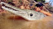 2米长的罕见鱼王力大如牛,船都被拖着暴走