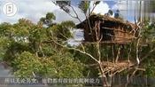 森林中原始部落,房子建在树上,族人个个是爬树高手!