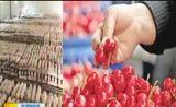[新闻午报-山西]山西省再添4个出口农产品示范区