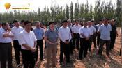 山东省夏玉米籽粒直收现场演示观摩会在高密举行