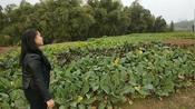 自贡小妮在农村坐拥多少土地?感叹自己是传说中的土豪!