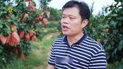 广州农商银行太阳集市种植匠系列片柚子种植匠