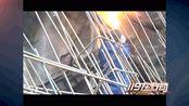重庆渝北:公园现马蜂窝扰民 消防火攻除蜂患