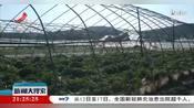 【众志成城 抗击疫情】德安:蔬菜滞销 镇村干部帮推销
