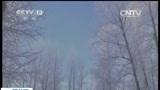 [新闻直播间]黑龙江:大兴安岭出现雾凇