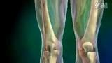 骨科:膝关节置换术