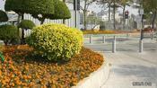 广州白云区绿化做得怎么样?