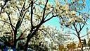 《新闻联播》史上最美结尾:拥抱春天