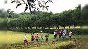【广东】云浮南山公园现28斤蟒蛇,大金山上已放生