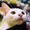 自由客 2014款2.4运动版爬坡视频(红河老厂)
