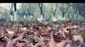[小树的相片02]理光GR2