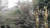 湖南省怀化市瑞丰园小区散步,在家3天没出门出来走走闲聊
