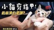 【黄阿玛的日常】小猫剪指甲!最崩溃的是谁?四小虎日常EP.4