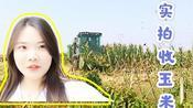 实拍山东济宁收玉米,机器收一亩90块钱,这个价格合适吗?
