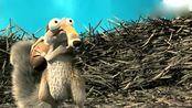 冰河世纪-一只松鼠贯穿了整部戏的笑点,为了这个松果是煞费苦心