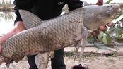 钓鱼,0.8加0.4的线组钓了一条7斤的草鱼