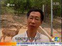通化公园小鹿出生  市民认养同步开始[新一天]