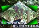葡萄-秦皇岛卢龙县牛心山葡萄采摘园