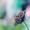 35.Mylène Farmer - California (Clip Officiel)