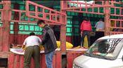 半挂车拉20多吨橘子到河南卖,批发什么价?