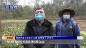 武汉有难,八方相助!多地无偿捐赠蔬菜,商务局现场办理交接手续
