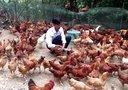 贵州省思南县杨家坳乡 小丰溪村 高家山组 熊绍辉 自办大型养鸡场