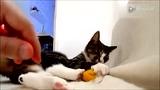可爱的小猫咪玩游戏好[ www.114ctv.com]
