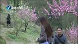 """[早安福建]南平:春到延城""""艳遇""""桃花 20130222"""