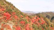 秋日假期—老君山