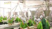 [内蒙古新闻联播]天赋河套品牌产业链条成为农牧民致富链