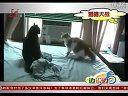 黑龙江电视台:动物搞笑集锦2010.7.27