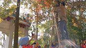 Vlog16:初冬广东南方的古寺居然有红枫叶?就在江门玉台寺(松下G8 12-60+weebill s练习)