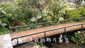 实拍广西桂林两江四湖景区 杉湖景区桃花盛开 好美的旅游城市