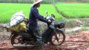 农村阿钦: 不让妈妈辛苦挑水果回家, 用摩托车拉, 雨后山路好难开