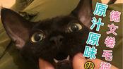 吸一吸无bgm的猫咪日常 | Gomi家的德文卷毛猫