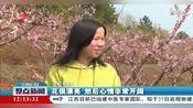 九江共青城:百亩桃花进入最佳观赏期