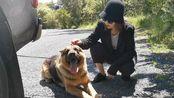 新西兰VLOG#装包柜#南瓜馒头怎么做#外食#带狗狗出去玩