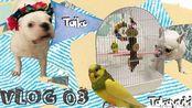 【米咖Mika】WEEKLY VLOG 03   家庭新成员Takayuki初登场 因为嗓子发炎都没能好好吃的一周