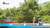 望谟县开展杨梅节 众多游客采摘品尝