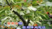 新歌速递《秋雨殇 》心走天涯视频制作172p高清晰版