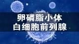 潘医生:能不能直接通过白细胞的数量,判定前列腺的健康?