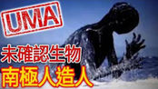 【UMA档案】听说过南极人造人?- NINGEN