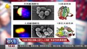 中国科学院在国际上首次人工创建了单染色体的真核细胞