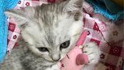 未满十八岁禁止观看 正经猫片 激吻40秒