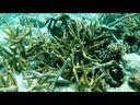 视频: 12-10-20马代 浮潜