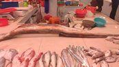 广东汕尾:早上来海边买海鲜,虾居然100元一斤,网友:吃不起!